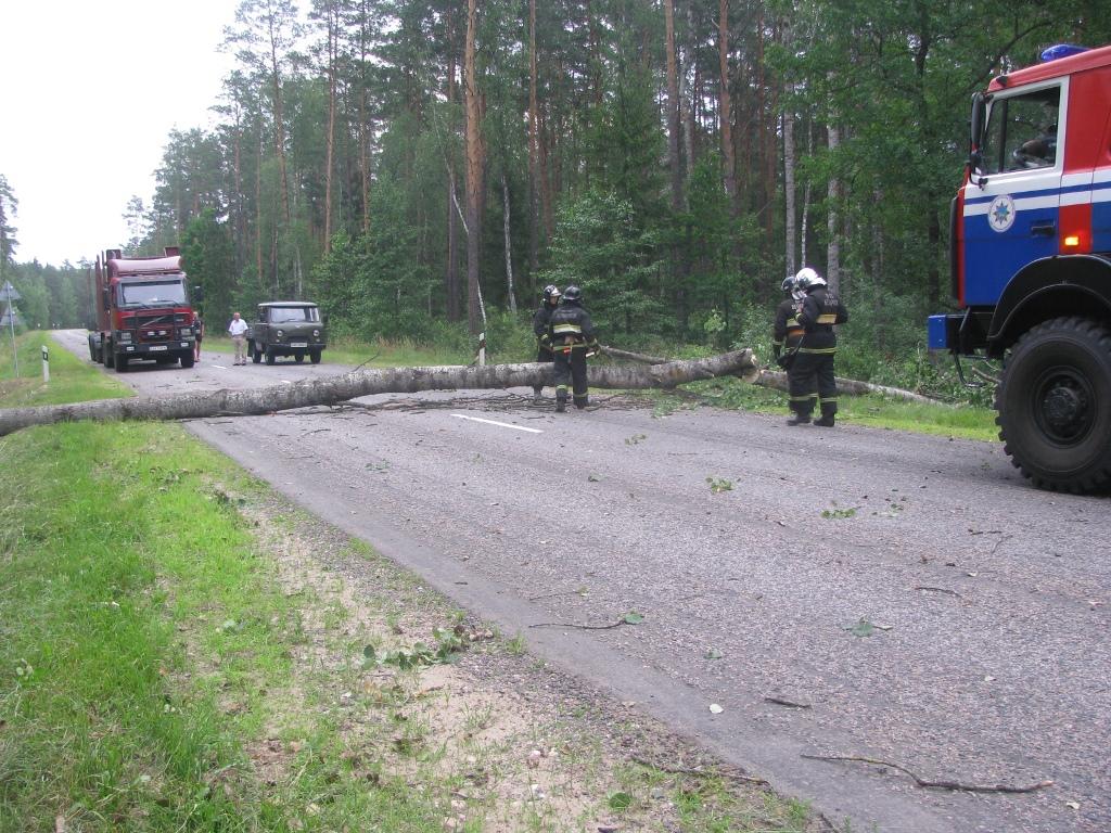 Последствия прохождения сильного ветра в Гомельской области